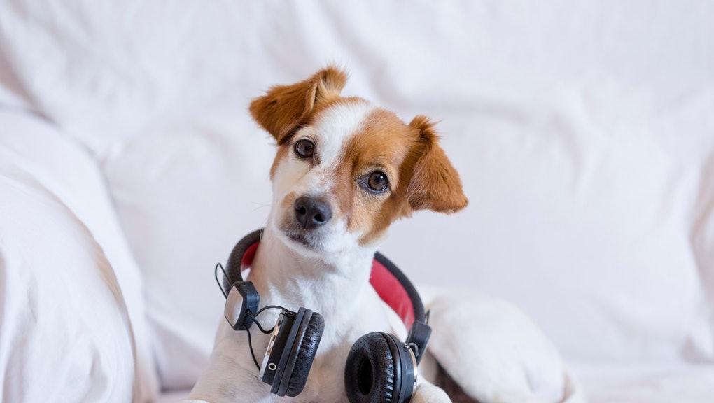 Thủ thuật tạo Danh sách nhạc thích hợp dành cho thú cưng của bạn